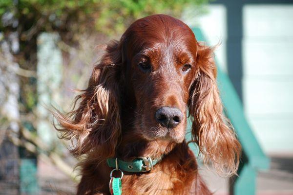 fotos de cães